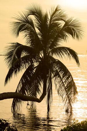 Coconut palm tree silhouette at sunset. Koh Phangan island, Thailand photo
