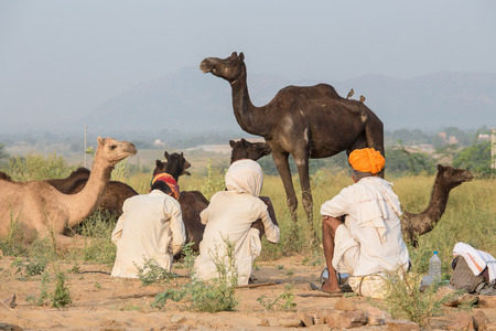 indian fair: PUSHKAR, INDIA - OCTOBER 27, 2014: Unidentified Indian three men attended the annual Pushkar Camel Mela. This fair is the largest camel trading fair in the world. Editorial