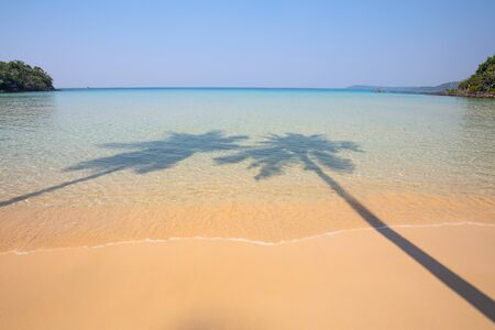 sea water: Shadow of two coconut palm trees on a transparent surface sea water and sandy shore Stock Photo