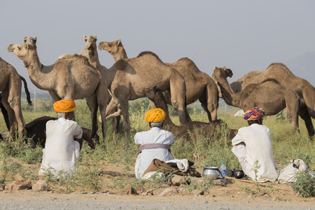 thar: PUSHKAR, INDIA - OCTOBER 26, 2014: Unidentified Indian three men attended the annual Pushkar Camel Mela. This fair is the largest camel trading fair in the world.