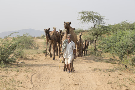 PUSHKAR, INDIA - OCTOBER 26, 2014: Unidentified Indian man attended the annual Pushkar Camel Mela. This fair is the largest camel trading fair in the world.