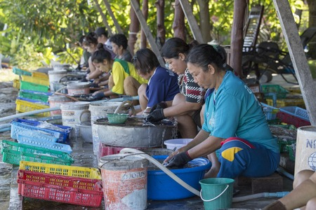 cleaned: KOH PHANGAN, THAILAND - NOVEMBER 16, 2015: Unknown woman cleaned squid drying in the fishing village. Fishing is main occupation and income source on the island Editorial