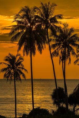 bounty: Coconut palm tree silhouette at sunset, Koh Phangan island, Thailand Foto de archivo