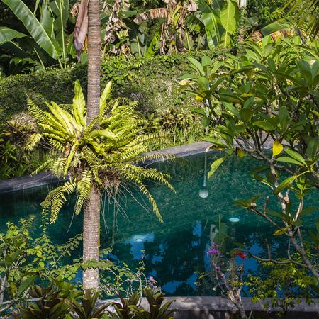 Swimming pool and palm tree in tropical garden. Island Bali, Ubud, Indonesia