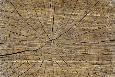 Closeup macro view of end cut wood tree section with cracks and annual rings. Natural organic texture with cracked and rough surface. Flat wooden surface with annual rings. Wooden texture background