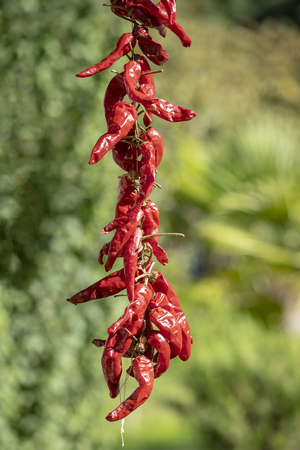 Red hot chili peppers hanging on a rope on the green nature background, close up