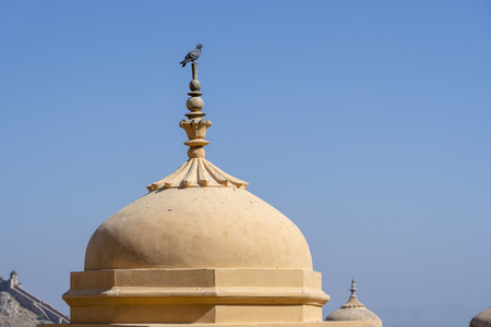 Gray dove on the dome and blue sky at Amber fort in Jaipur, Rajasthan, India. Stock Photo