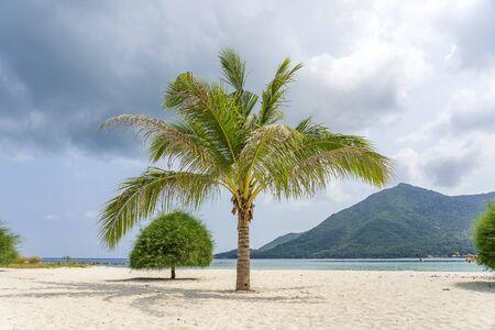 Exotic green palm tree on white sand beach near sea water on a cloudy day in island Koh Phangan, Thailand Zdjęcie Seryjne