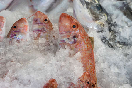 Raw fish on ice for sell in the street market. Bodrum, Turkey. Close up