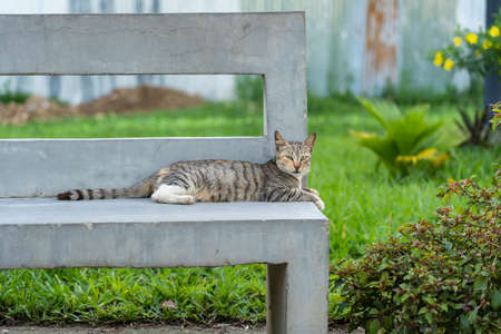 A homeless cat is resting on a stone bench on the street on the island of Zanzibar, Tanzania, east Africa, close up
