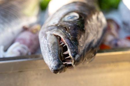 Close up on barracuda teeth. Sea fresh fish barracuda at street food market in Thailand. Seafood concept. Raw barracuda for cooking