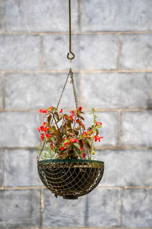 Red flowers in a flowerpot hanging on an old house wall in mountain village Sapa, Vietnam, close up Zdjęcie Seryjne