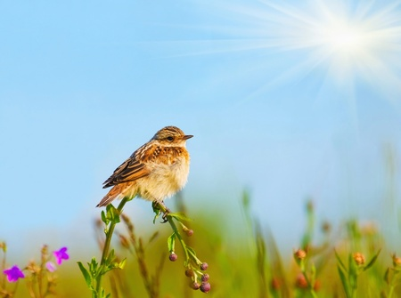 lark sits on a flower on a background of blue sky