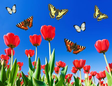 butterflies circling above the flower field photo