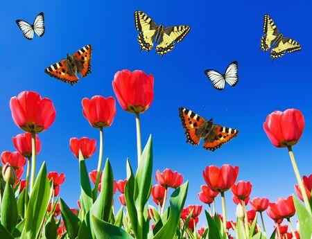 circling: butterflies circling above the flower field