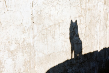black and white wolf: shadow of the wolf on the cracked wall