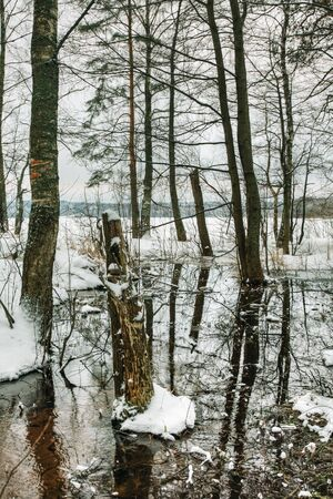 spring thaw in the winter forest photo