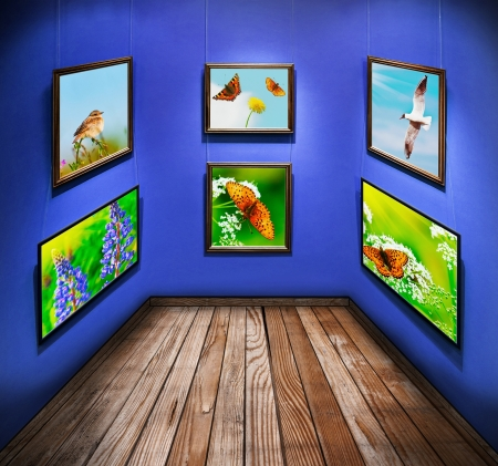 frames with photos of nature and animals hanging in the room photo