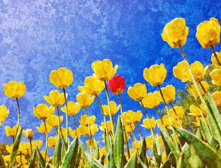 yellow tulips against the blue sky photo
