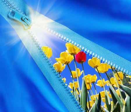 Zipper opens a field of flowers and bright sunshine Stock Photo - 14758371