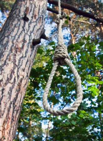 gibbet: gallows on a tree in a forest