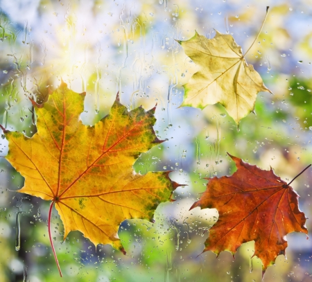 water level: Fallen autumn leaves on wet from rain glass Stock Photo