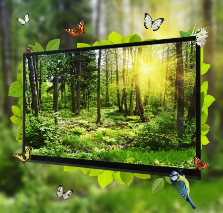 Forest Life shows on the TV screen. Can be used in advertising products of electronics (TVs, plasma, video, cable TV, etc.) photo