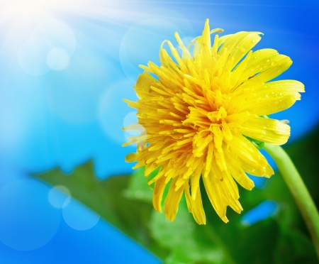 flowering dandelion on a background of blue sky Archivio Fotografico