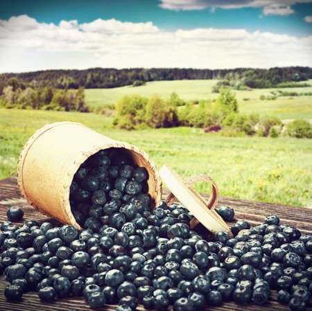 Blueberries in a basket is scattered on the wooden table. toned image photo