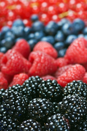 various berries background. Shallow depth of field and the focus is on the blackberry photo