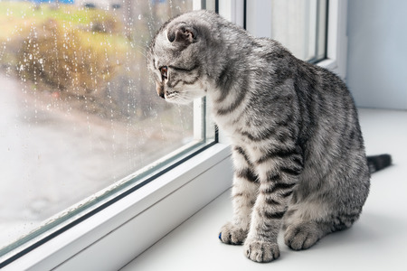 cat sits on a windowsill and looking out the window Archivio Fotografico
