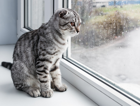 cat sits on a windowsill and looking out the window Stock Photo