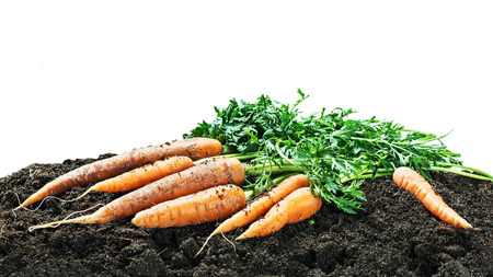 harvests: Harvest carrots on earth isolated on white background