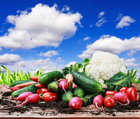 harvest vegetables on a wooden table on a background of nature photo