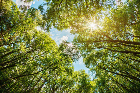 sun shining through the treetops. The sun is natural, without the use of filters