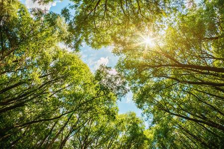 zon schijnt door de bomen. De zon is natuurlijk zonder gebruik van filters Stockfoto