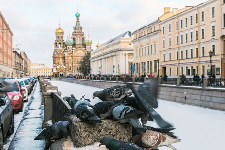 feeding frozen dove on a background of Church of Our Savior on Spilled Blood in St. Peterburg. Focus on the eyes of a dove photo