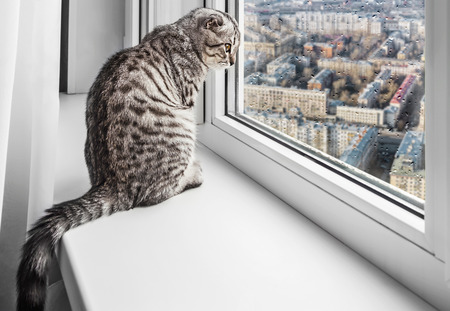 cat sitting on a window sill and looking at the rainy city. Focus on the eyes of a cat photo