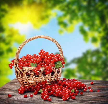 fresh berries red currant in a basket on a wooden table photo