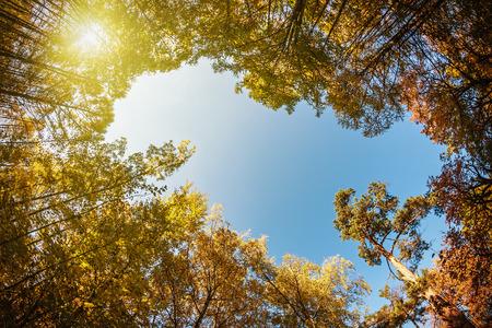 boomtoppen in de herfst bos. gefotografeerd op een fisheye-lens. concentreren op de toppen van de bomen