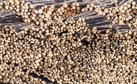 stack of firewood: Background of firewood stack. pile of chopped firewood logs