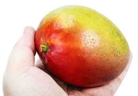 mango: hand holds a ripe mango isolated on a white background. Focus on the top of a mango