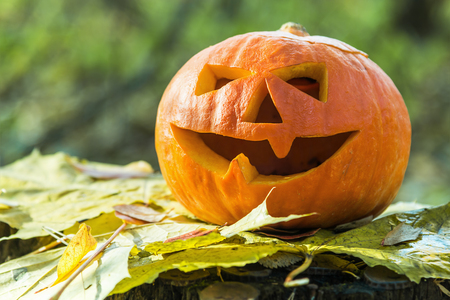 Jack Lantern for Halloween on a stump in a forest in autumn Stock Photo