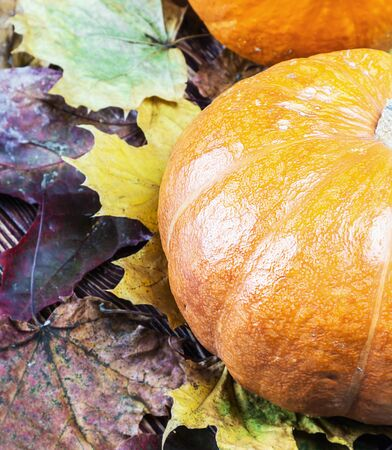 decorate: ripe pumpkin in autumn maple leaves decorate Stock Photo