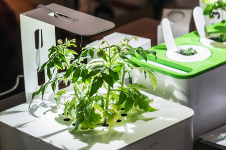 Moscow, Russia - November 4, 2016: first international exhibition of high tech cropping and cooking Smart Food Geek Garden Editorial