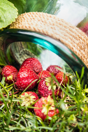 strawberry harvest and empty glass jar on the grass in the garden