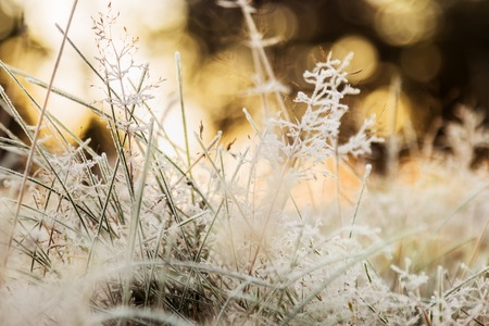 grass is frozen in ice crystals on the backdrop of the setting sun. Vignette is made for artistic effect Archivio Fotografico