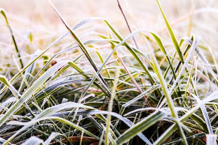 frozen green grass covered with snow and ice in the winter forest Banque d'images - 135490884