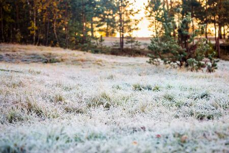 frozen green grass covered with snow and ice in the winter forest Banque d'images - 135490076
