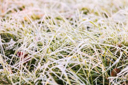 frozen green grass covered with snow and ice in the winter forest Banque d'images - 135493173